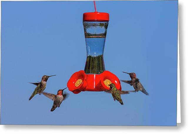 Anna's Hummingbirds At Feeder Greeting Card