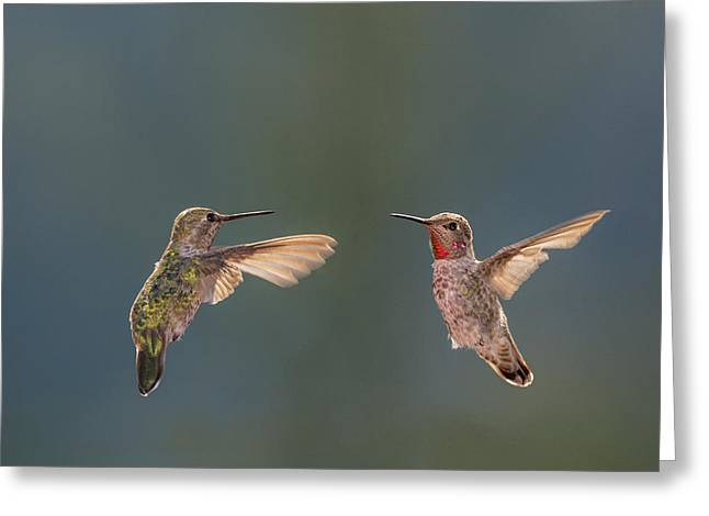 Anna's Hummingbirds Greeting Card