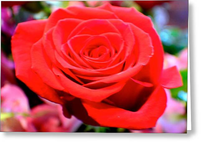 Anniversary Rose Greeting Card