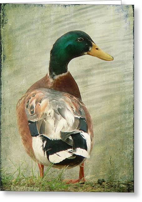 Another Duck ... Greeting Card