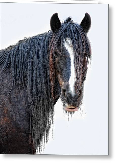 Another Horse With No Name Greeting Card by Joachim G Pinkawa