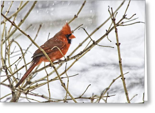 Another Snowy Day Greeting Card