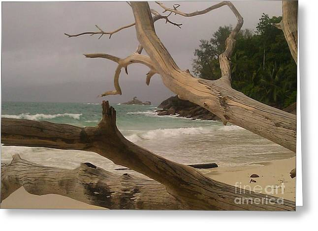 Anse Soleil Beach Greeting Card by Ted Williams