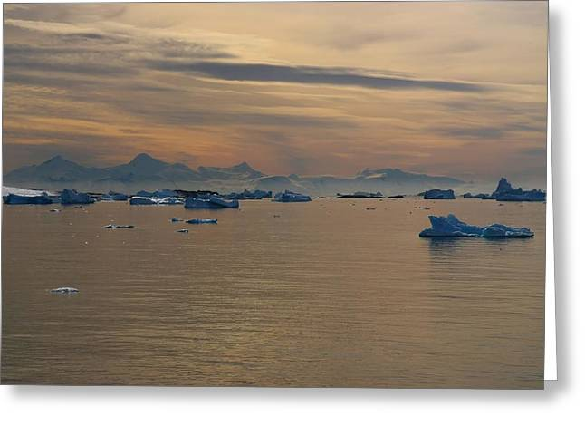 Antarctic Ice Greeting Card by FireFlux Studios