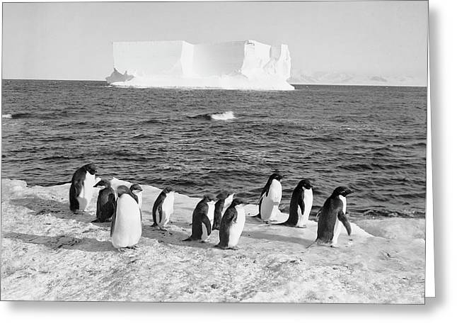 Antarctic Penguins And Iceberg Greeting Card by Scott Polar Research Institute