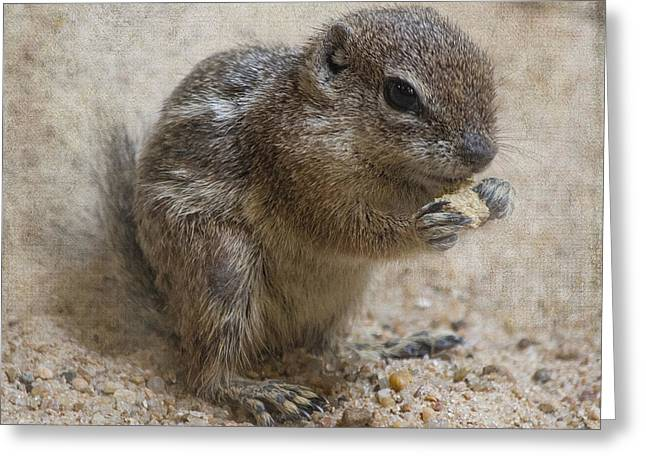 Antelope Ground Squirrel - Houston Zoo Greeting Card by TN Fairey