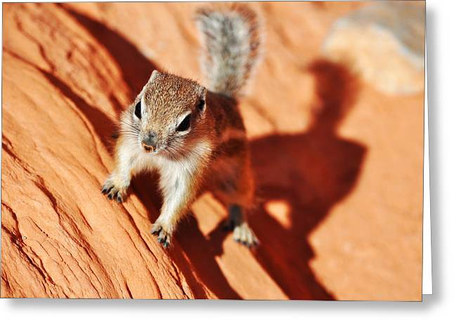 Antelope Ground Squirrel Greeting Card by Kyle Hanson