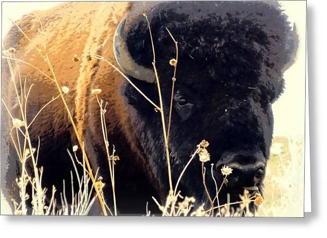 Antelope Island Buffalo Greeting Card by Heidi Manly
