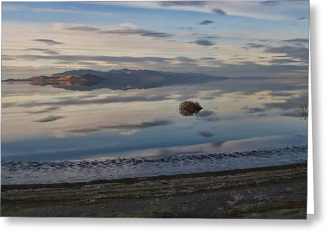 Antelope Island - Lone Tumble Weed Greeting Card by Ely Arsha
