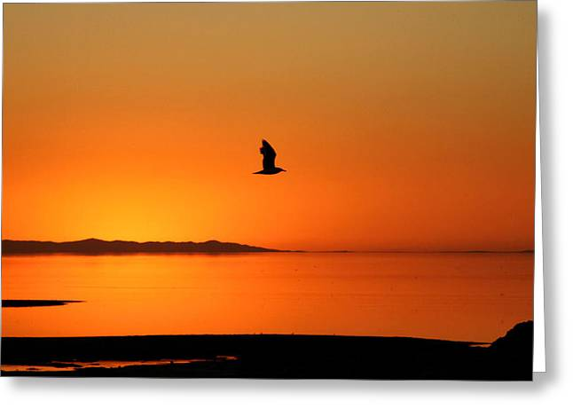 Antelope Island Sunset - 1 Greeting Card by Ely Arsha