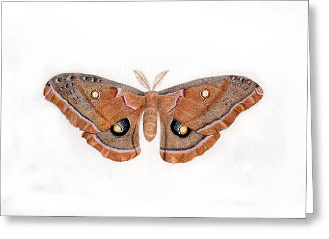Antheraea Polyphemus Greeting Card by Inger Hutton
