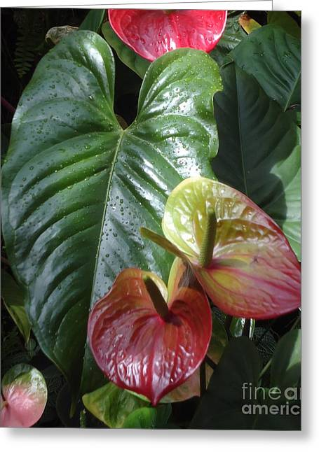 Anthurium Greeting Card by Ann Johndro-Collins