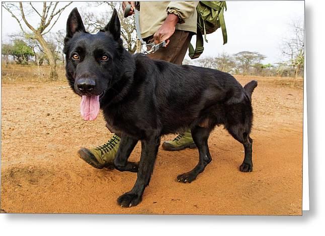 Anti-poaching Dog Patrol Greeting Card