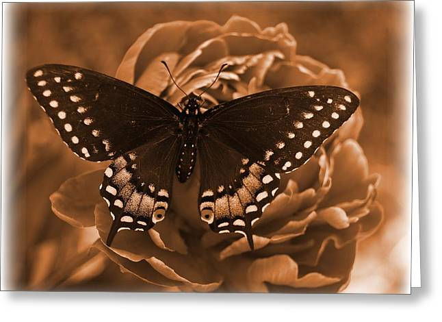 Antique Butterfly Greeting Card by Diane Reed