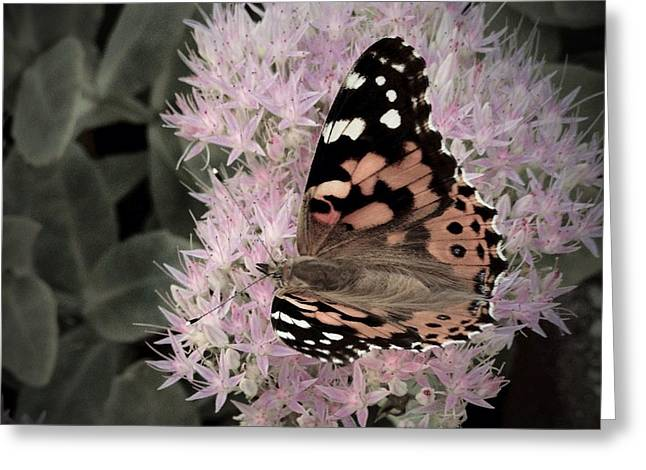 Greeting Card featuring the photograph Antique Monarch by Photographic Arts And Design Studio