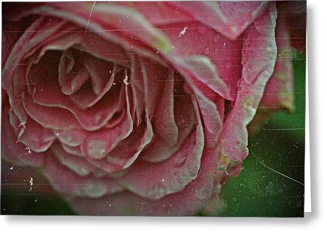 Antique Rose In Fog Greeting Card