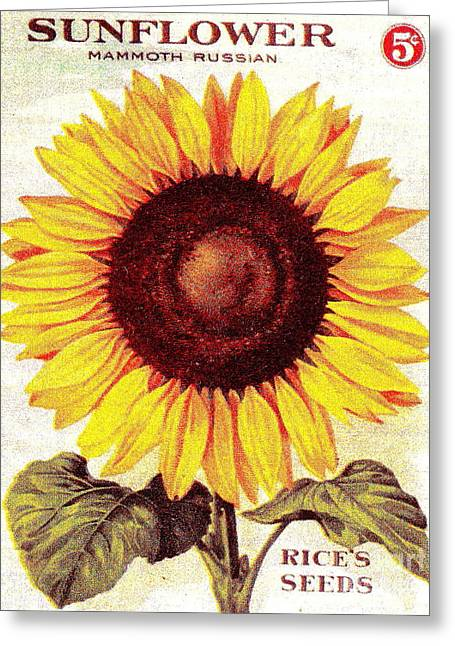 Antique Sunflower Seeds Pack Greeting Card