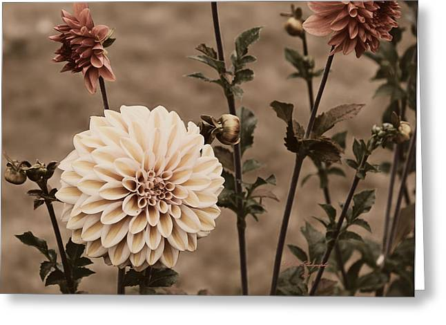 Greeting Card featuring the photograph Antiqued Dahlias by Jeanette C Landstrom