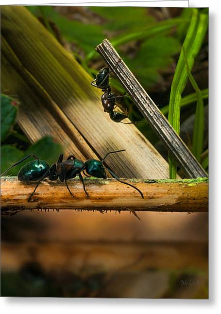 Ants Adventure 2 Greeting Card by Bob Orsillo