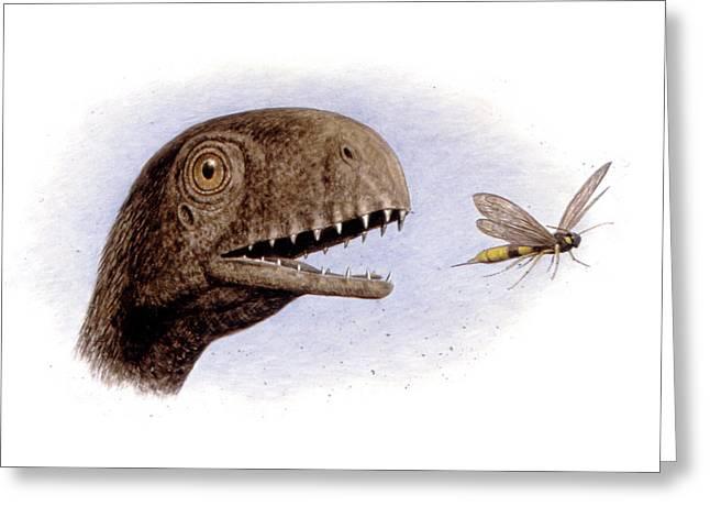 Anurognathus Pterosaur Greeting Card