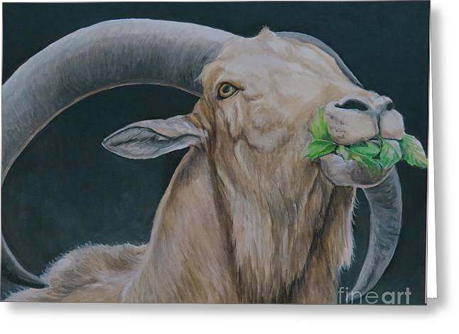 Aoudad Sheep Greeting Card by Charlotte Yealey