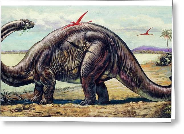Apatosaurus With Pterosaurs Greeting Card by Deagostini/uig