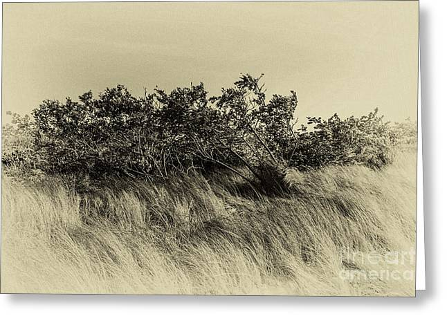 Apollo Beach Grass Greeting Card by Marvin Spates