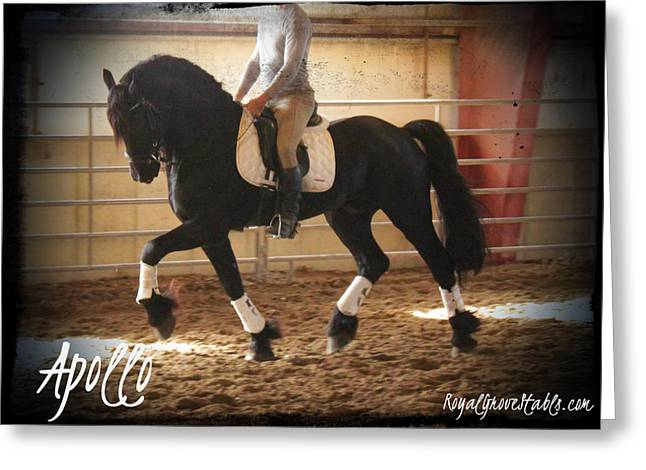 Apollo Friesian Stallion Greeting Card