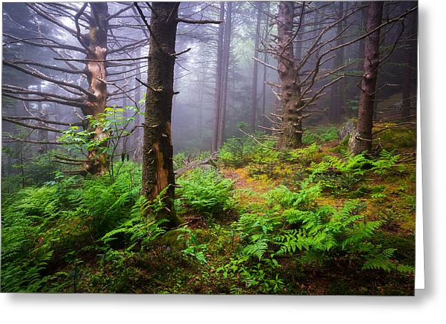 Appalachian Trail Blue Ridge Mountains Nc Forest Greeting Card by Dave Allen