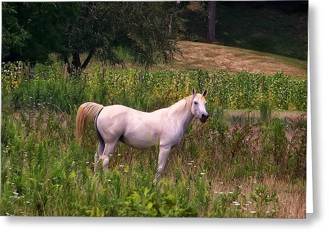 Appaloosa Horse Greeting Card by Chris Flees