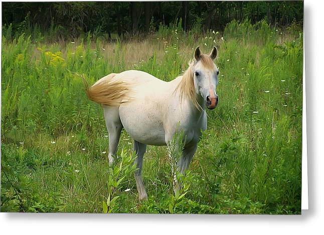 Appaloosa Horse Stare Greeting Card by Chris Flees