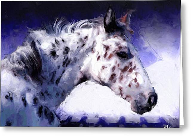 Appaloosa Pony Greeting Card by Roger D Hale