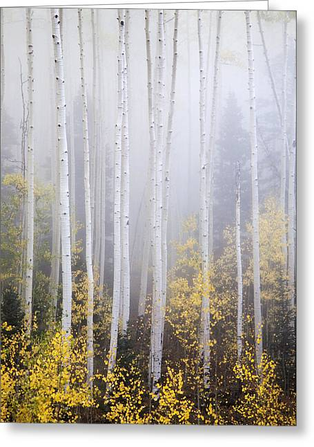 Apparitions I Greeting Card