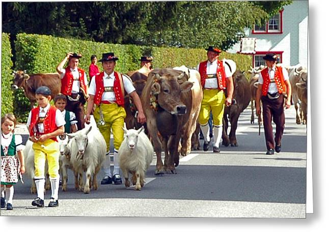 Appenzell Parade Of Cows Greeting Card