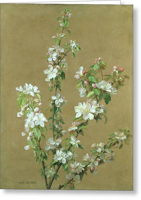 Apple Blossom Greeting Card by Jean Benner