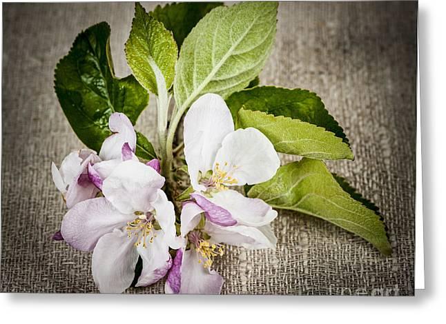 Apple Blossom On Linen Greeting Card by Elena Elisseeva