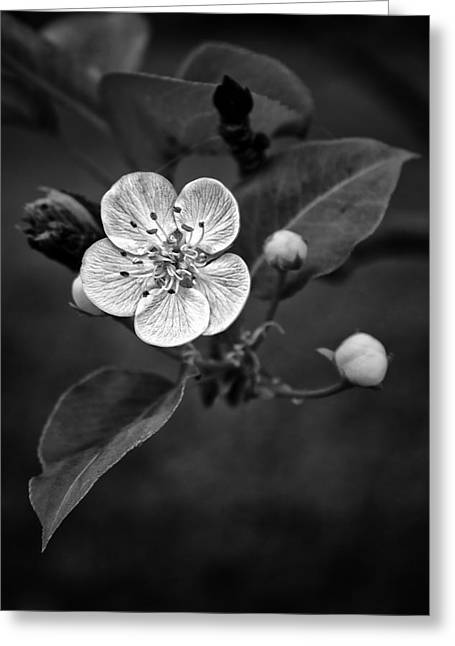 Apple Blossom On The Farm Greeting Card