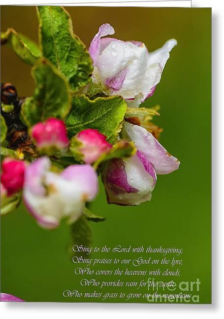 Apple Blossom Raindrops Greeting Card by Thomas R Fletcher
