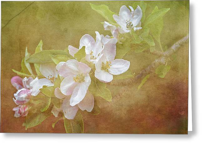 Apple Blossom Spring Greeting Card by TnBackroadsPhotos