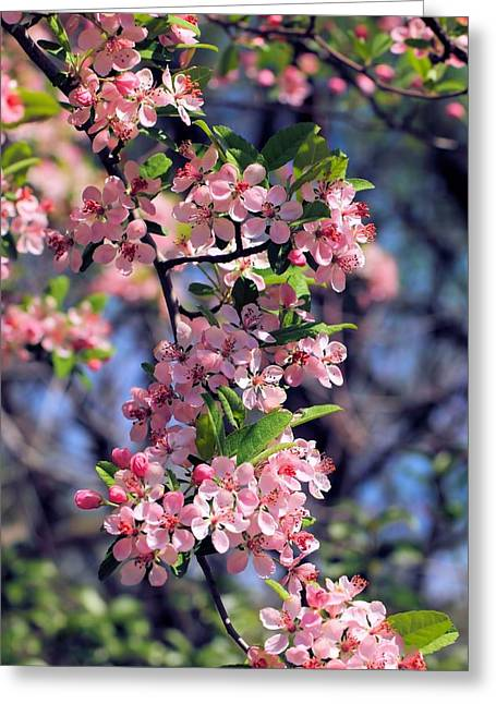 Apple Blossom Time Greeting Card by Katherine White