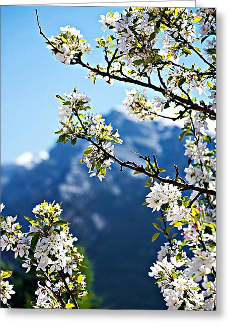 Apple Blossoms Frame The Rockies Greeting Card by Lisa Knechtel