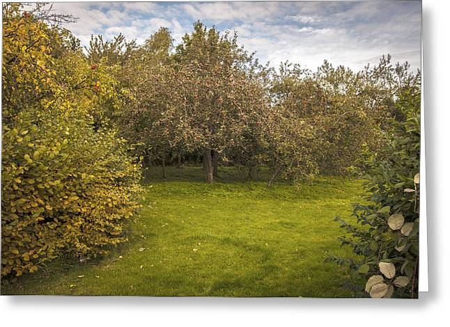 Apple Orchard Greeting Card by Amanda Elwell