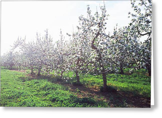 Apple Orchard, Hudson Valley, New York Greeting Card by Panoramic Images