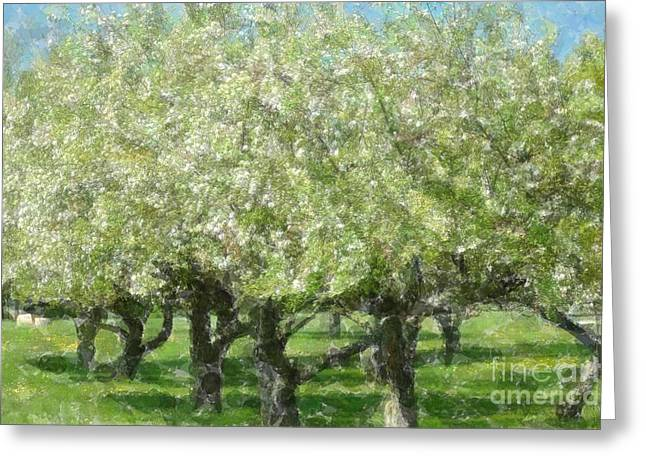 Apple Orchard Greeting Card by Kathleen Struckle