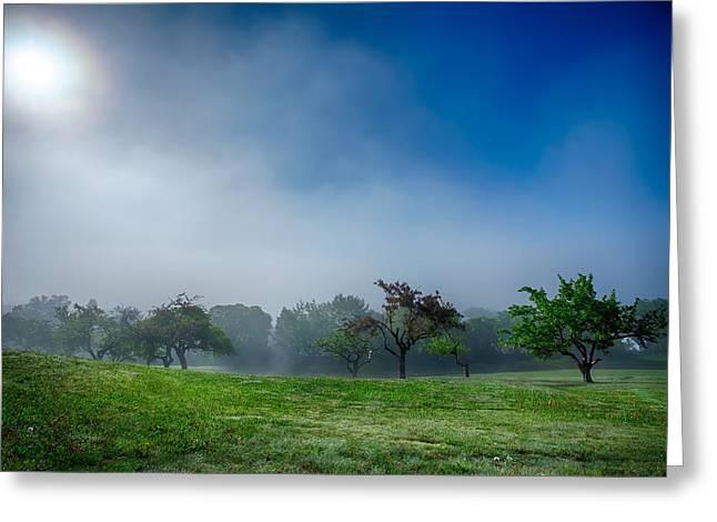 Apple Orchard Receeding Fog  Greeting Card by Jakub Sisak