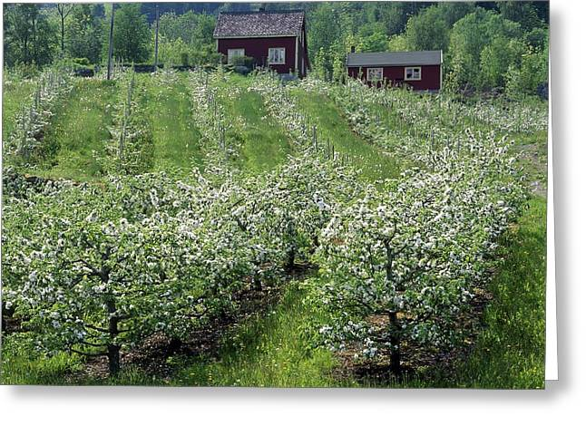 Apple Orchard Greeting Card by Science Photo Library