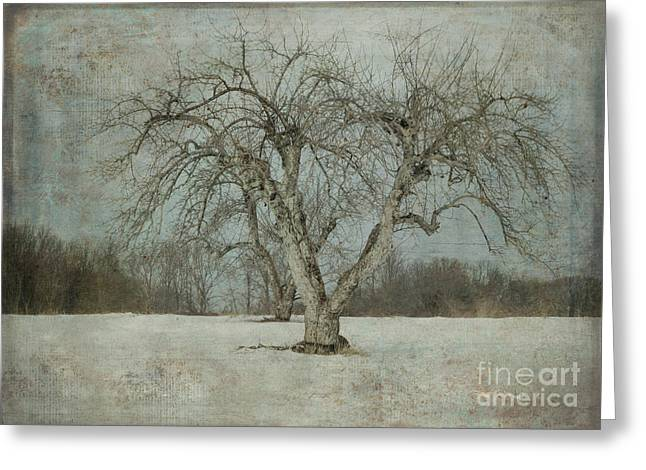 Greeting Card featuring the photograph Apple Tree In Winter by Vicki DeVico