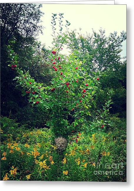 Apples And Hornets Greeting Card by Garren Zanker