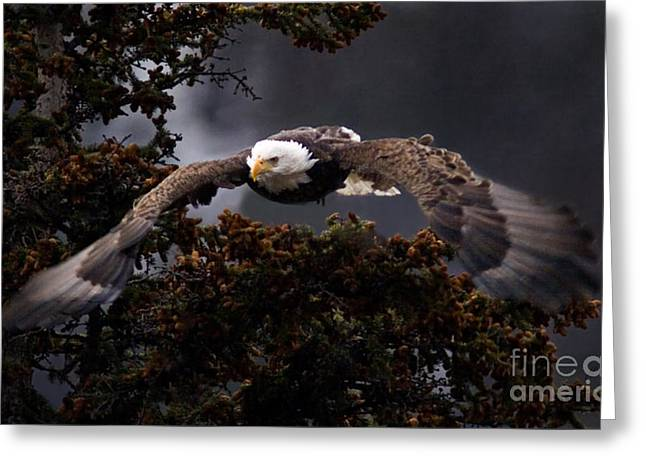 Approaching Eagle-signed- Greeting Card
