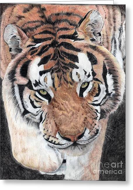 Approaching Tiger Greeting Card by Audrey Van Tassell